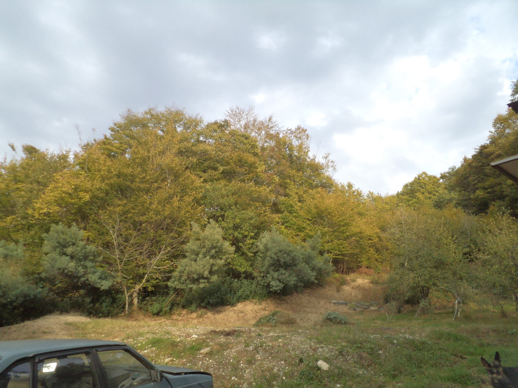 земельный участок в Чайсовхозе