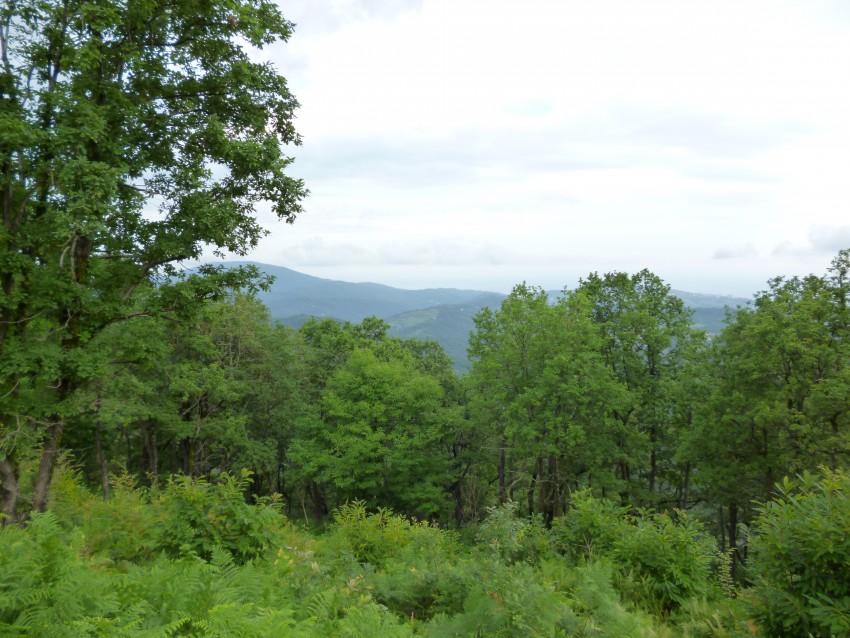 земельный участок в экологически чистом районе